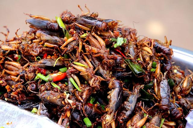 Hmyz v salátu