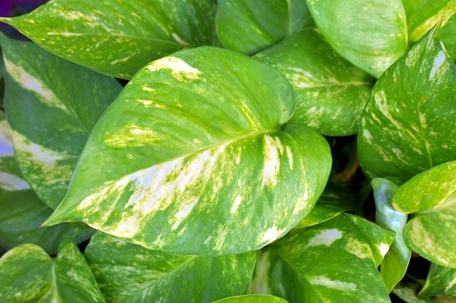 Pokojové rostliny jako spojenec pro čistější vzduch