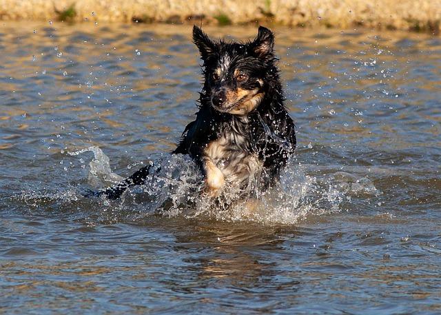 koupající se pes